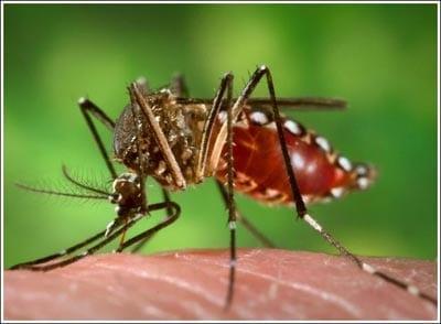Cách bắt và đuổi những con muỗi đáng ghét 10