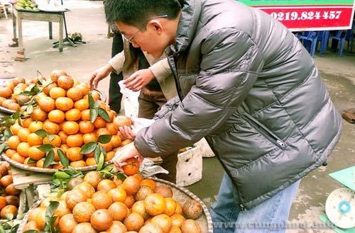 Cam Bắc Quang Hà Giang