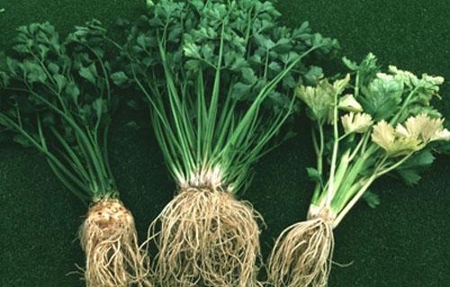 Tác dụng từ vỏ, lá, hạt và rễ của một số rau quả