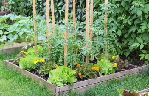 How to start a vege garden