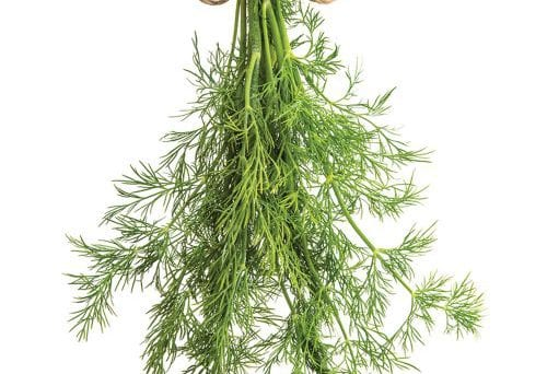 In season early summer: Dill, cherry tomatoes, rocket 5